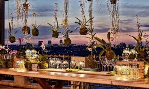 Katy's Palace Bar | Sunset View Over Jozi | GlamCam